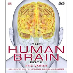 The Human Brain — Tri-City Psychology Services